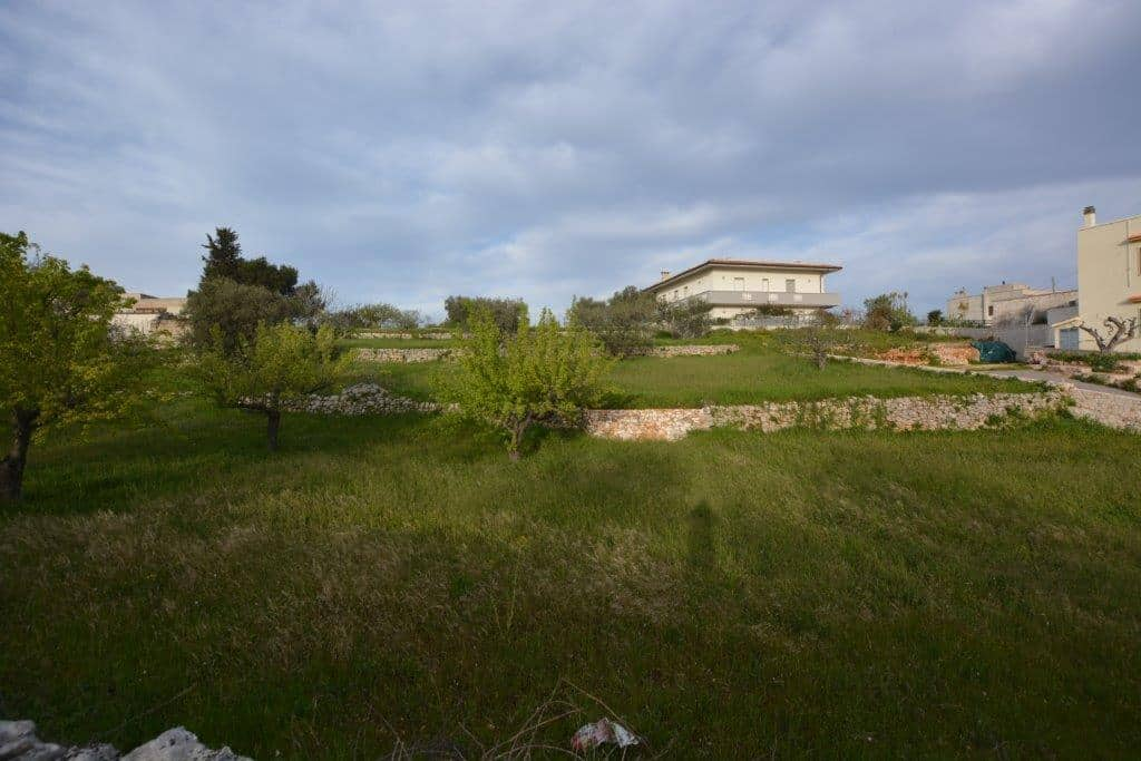 Building land in Cisternino