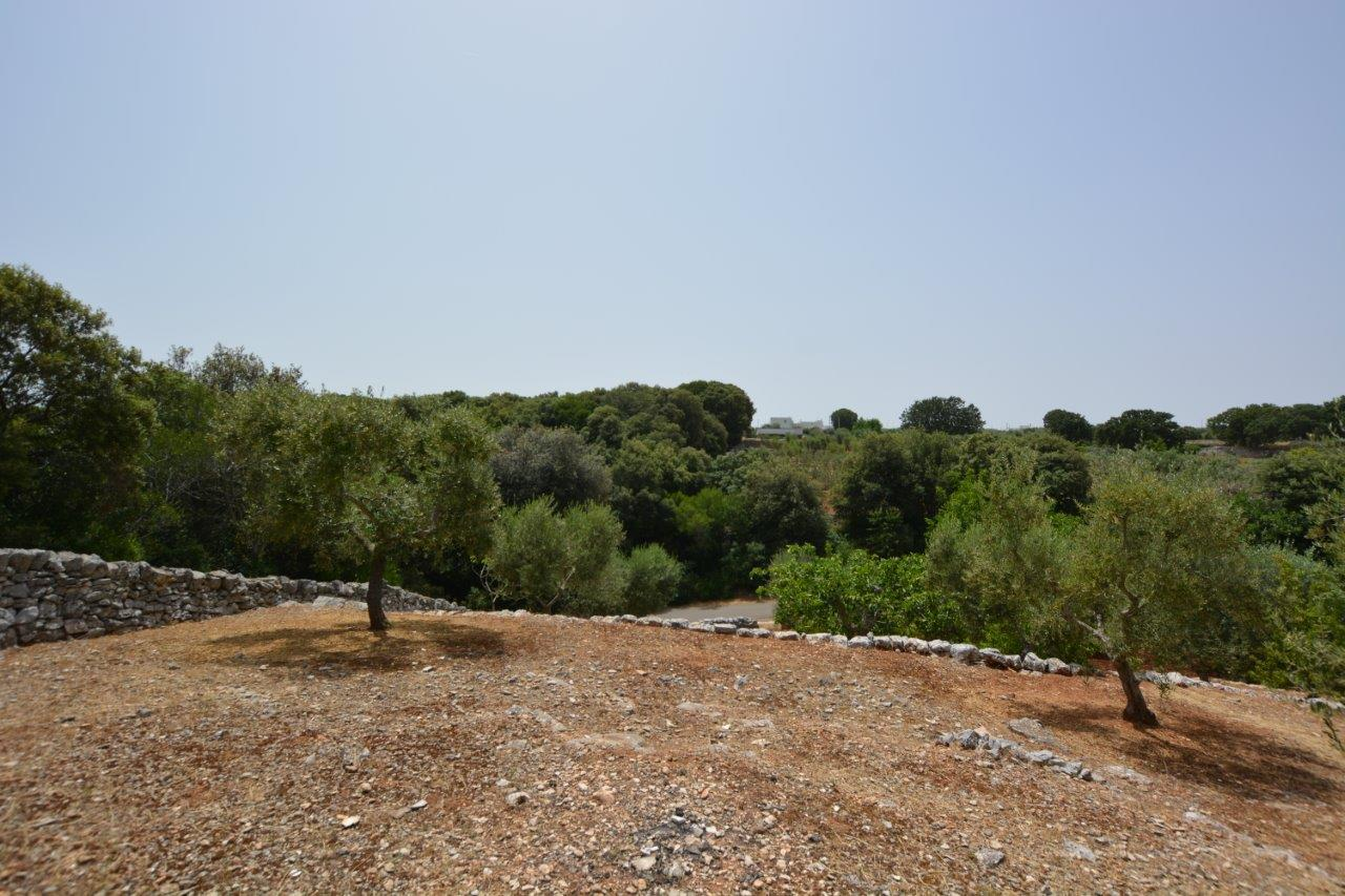 Panoramic Land with woodland